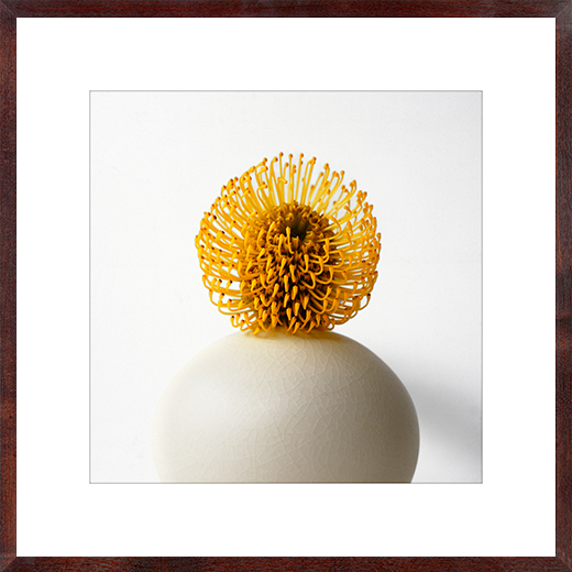 Pincushion Protea in Ivory Crackle Vase